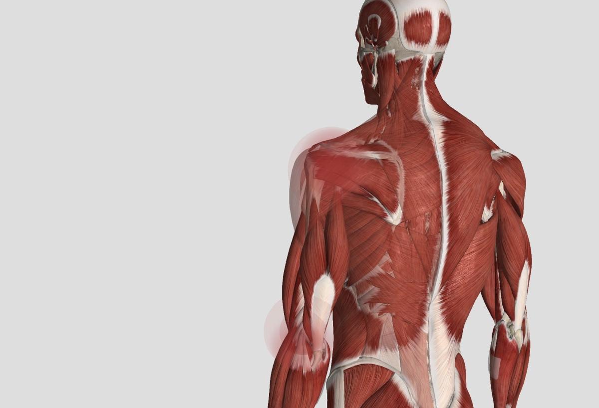 ゴルフ 左肩を使うための脊柱の運動連鎖