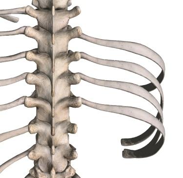 胸肋関節の異常