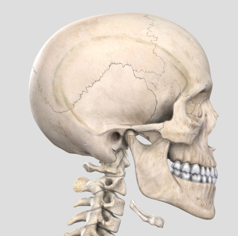 temporomandibular articulation