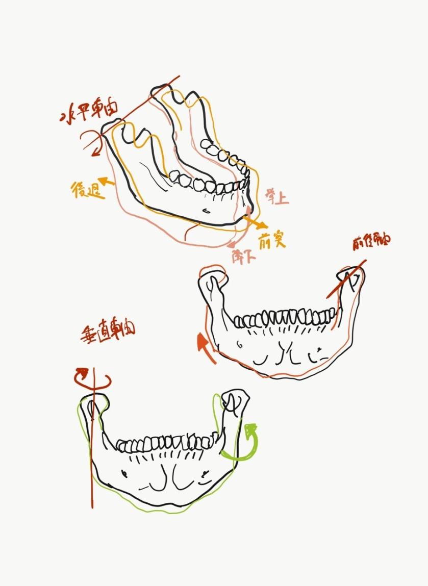 顎関節の機能解剖