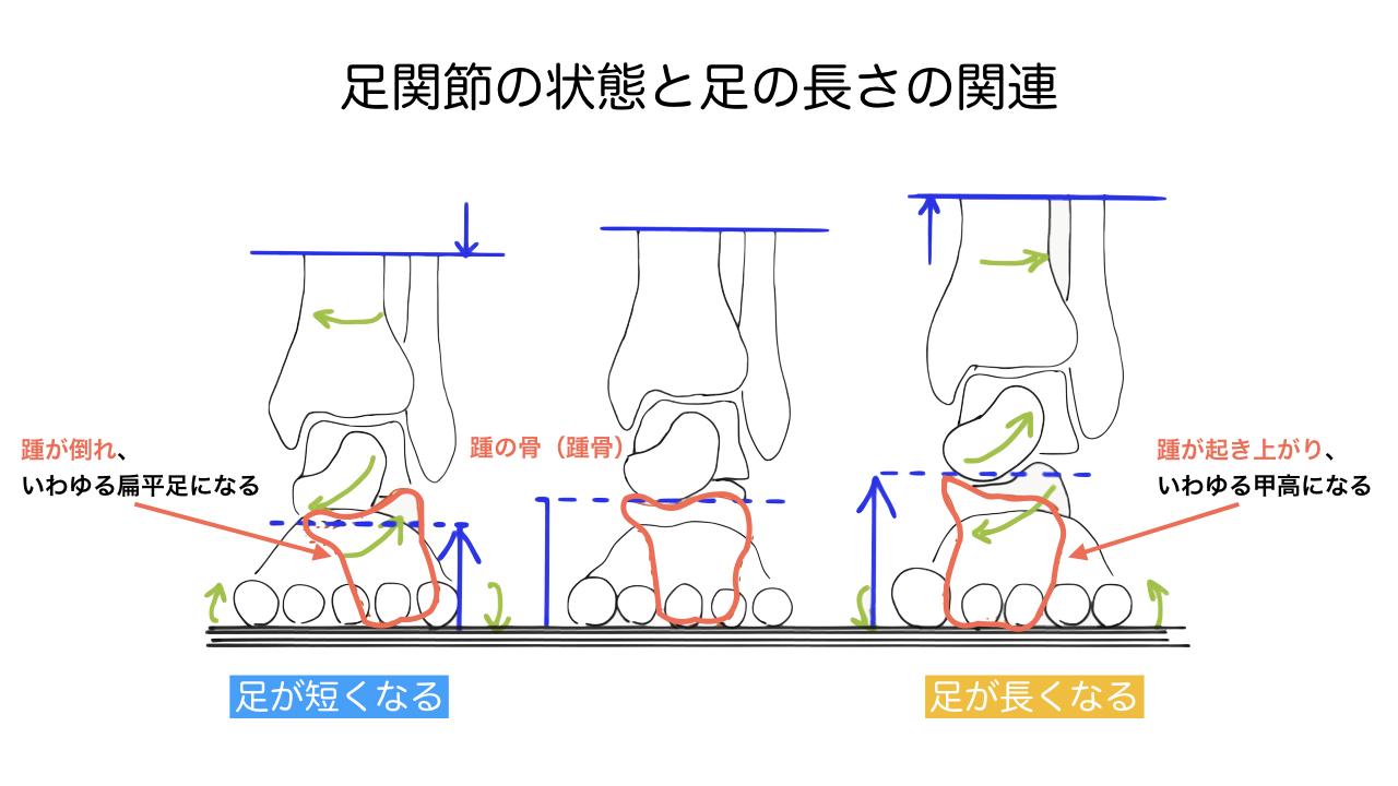 足関節の状態と足の長さの関連.017