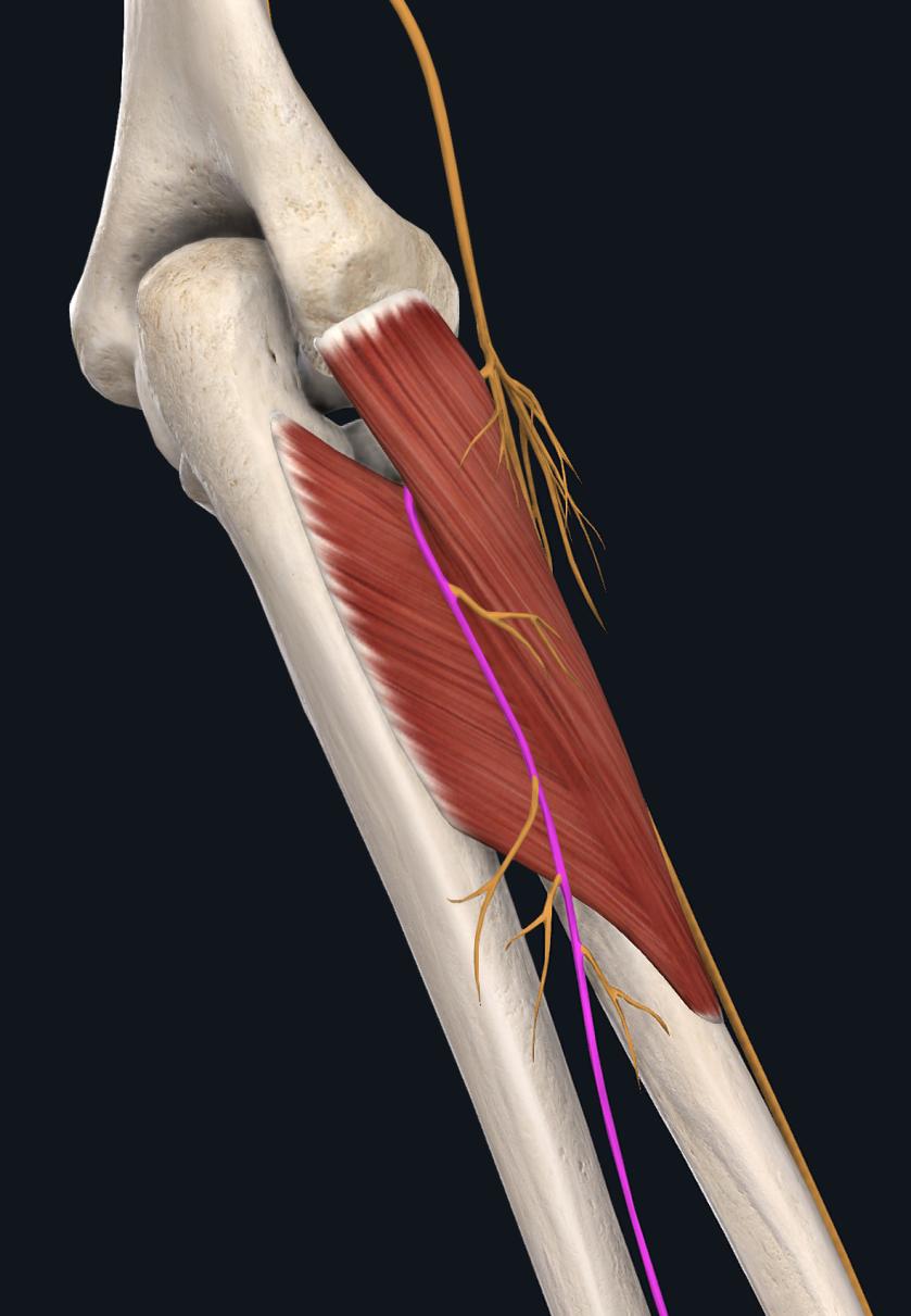 回外筋の絞扼神経