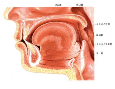 口腔筋機能療法 舌がうまく動かない