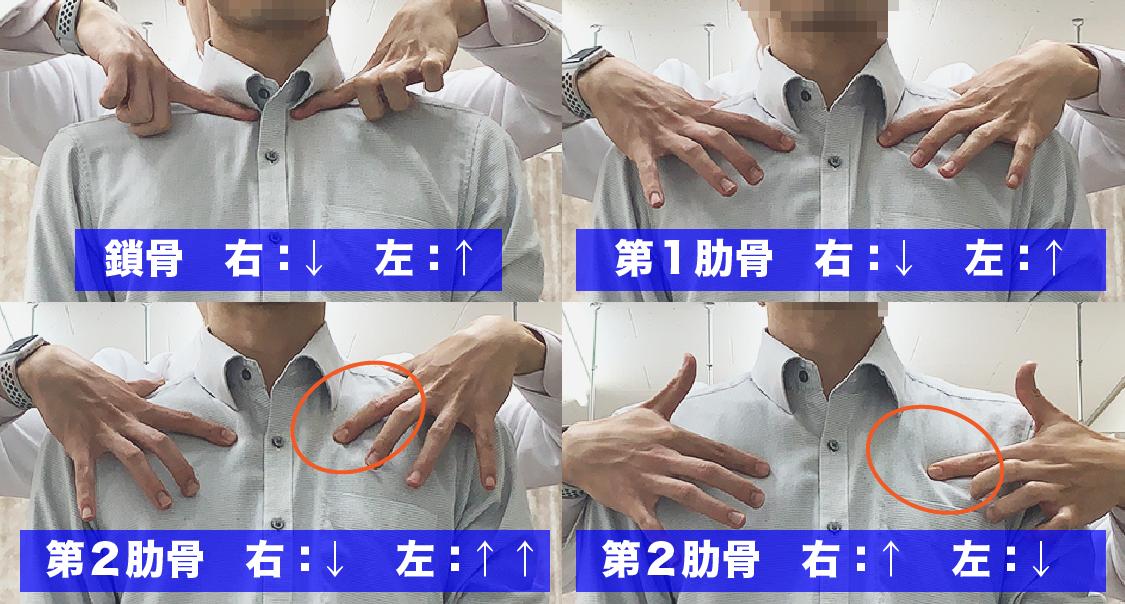 肋骨の触診