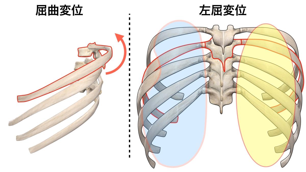 呼吸機能の改善 肺の手術後やランニングのコンディショニング 東京都/田町駅/三田駅 さいたま市/与野駅/ さいたま新都心駅