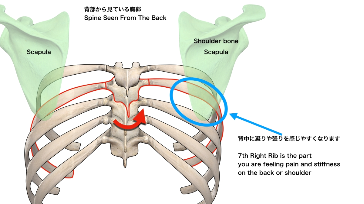 腕の筋力低下 上肢の神経障害とその原因 東京港区田町・三田/ さいたま市中央区 治療院